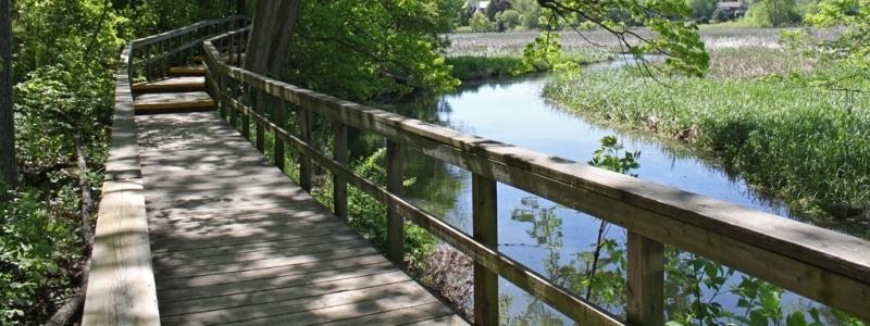 Rattray Marsh Nature's Paradise